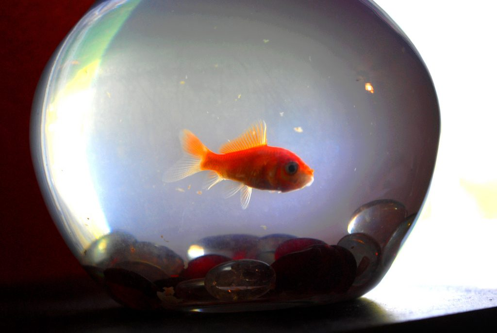 akwarium kula rybki animalistka.pl blog o zwierzętach zoologiczny