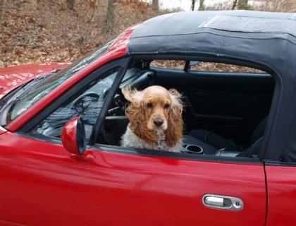 co zrobić z psem w wakacje, wakacje z psem, podróżowanie, petsitter, hotel dla psów zwierząt, blog o dzikich zwierzętach, animalistka.pl