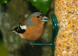 karmnik, jak dokarmiać ptaki zimą, czym, czym nie karmić, jak pomagać ptakom, animalistka.pl, animalistka, blog o zwierzętach, zoologiczny