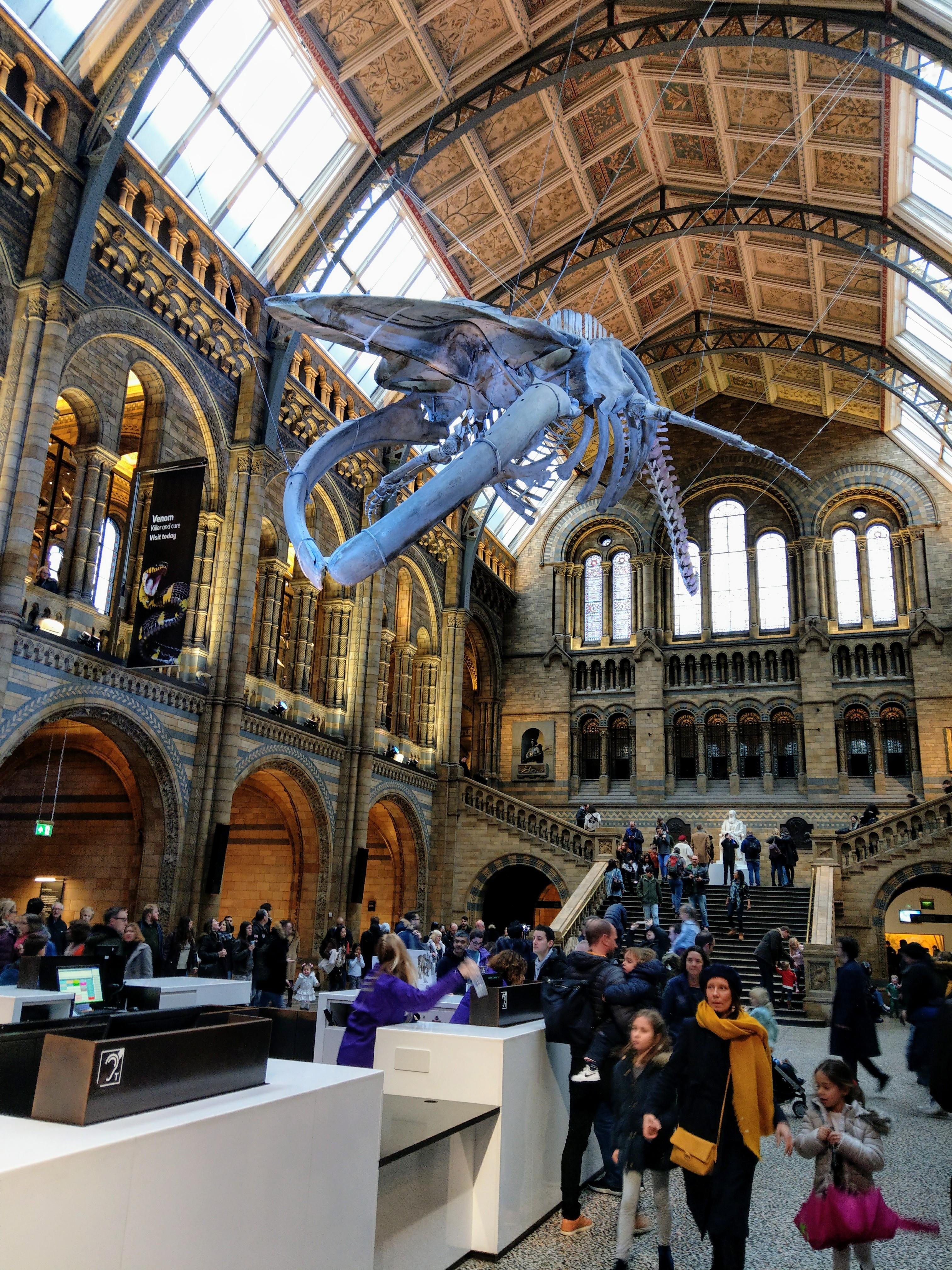 muzeum historii naturalnej londyn natural history museum london czy warto co warto godziny ceny co zwiedzić w londynie co zobaczyć blog o zwierzętach animalistka animalistka.pl