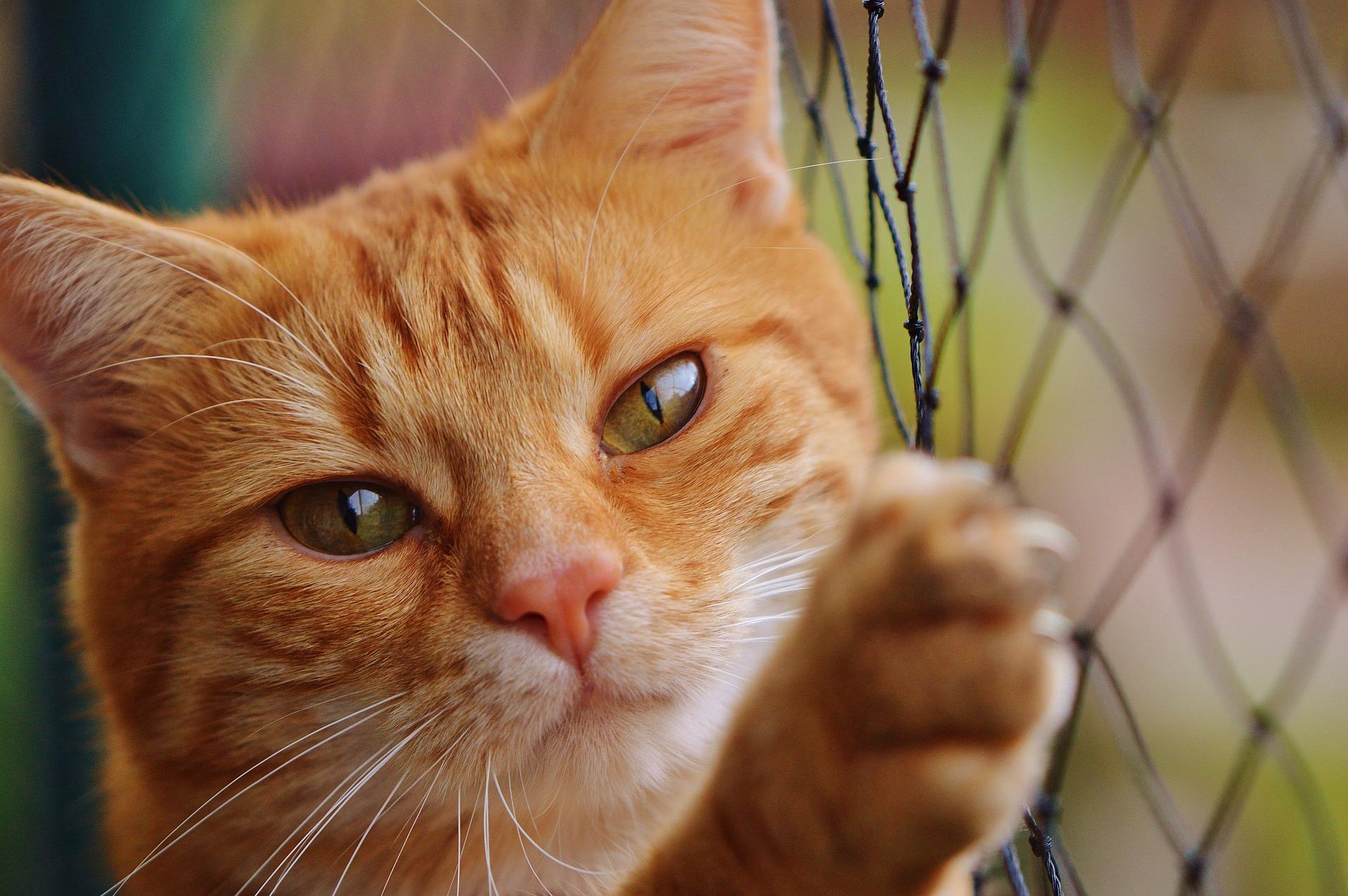 fobie związane ze zwierzętami, fobia, lęk przed, animalistka.pl, blog o zwierzętach, animalistka, fobie znanych ludzi celebrytów