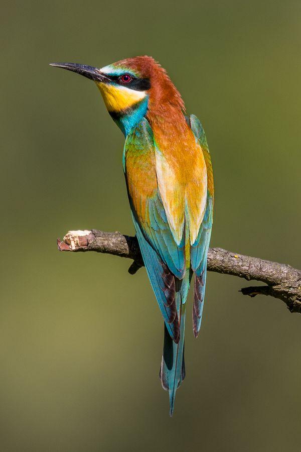 najbardziej kolorowe polskie ptaki najbarwniejsze w polsce żołna dudek kraska wilga modraszka bogatka zimorodek gil dzięcioł zielony blog o zwierzętach animalistka.pl animalistka