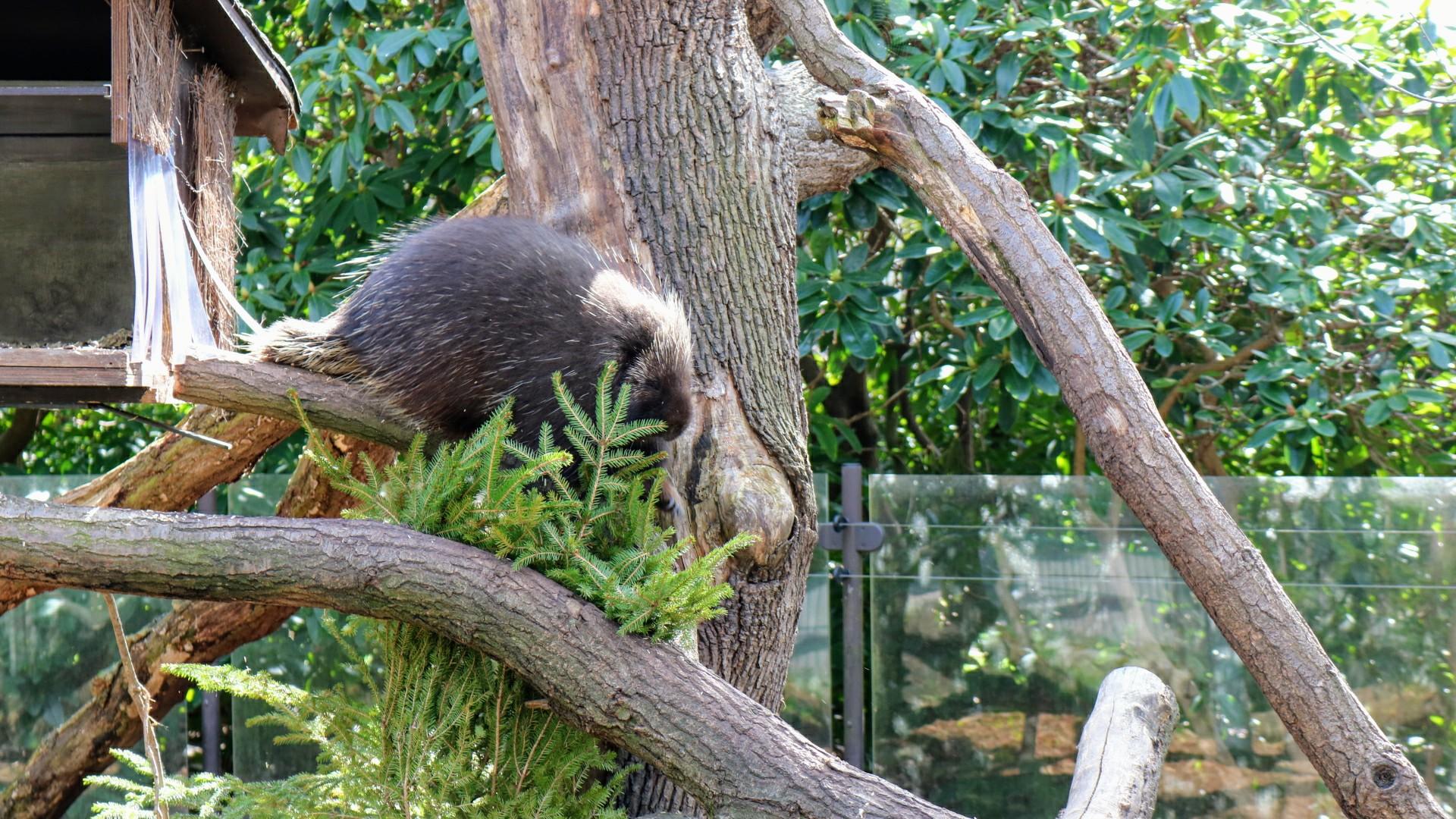 drezno na weekend, zwiedzanie ogród zoologiczny, zoo, zwierzęta, blog o zwierzętach, animalistka.pl