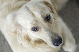 Co zrobić z psem w wakacje, najlepszy blog o dzikich zwierzętach, animalistka.pl