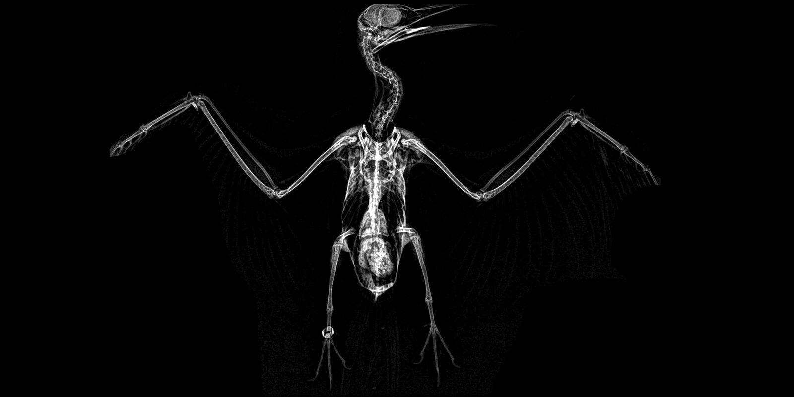 prześwietlenie, rentgen dzikich zwierząt, jak zoo dba o zwierzęta, ogród zoologiczny, oregon, dzikie zwierzęta na zdjęciach, zdjęcia, blog o dzikich zwierzętach, animalistka.pl