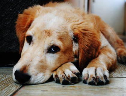 dom tymczasowy, jak zostać domem tymczasowym, jak pomóc zwierzętom, stowarzyszenie ochrony zwierząt, fundacja, ekostraż, blog o dzikich zwierzętach, animalistka.pl