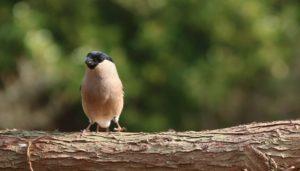 infografika, co szkodzi ptakom, czy karmić ptaki chlebem, dokarmianie ptaków wodnych, kaczek, łabędzi, co dać do karmnika, co jedzą ptaki, zdrowe karmienie ptaków, zespół anielskiego skrzydła, co to jest, blog o dzikich zwierzętach, animalistka, animalistka.pl