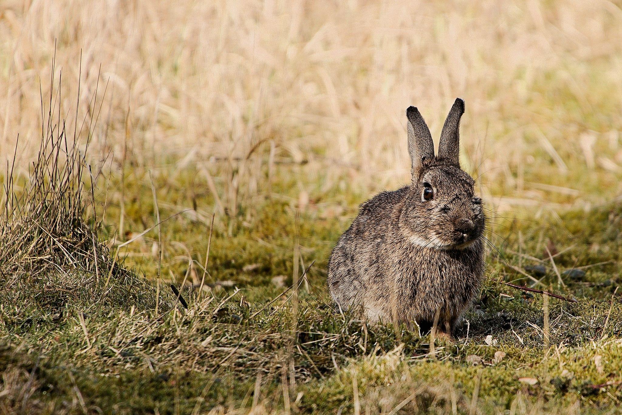 Quiz, wiedza o polskich zwierzętach, polskie gatunki ssaków, ssaki Polski, blog o dzikich zwierzętach, animalistka, animalistka.pl