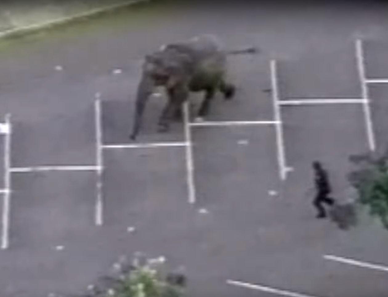 cyrk ze zwierzętami, słoń, słonica Tyke, historia, blog o dzikich zwierzętach, animalistka, animalistka.pl