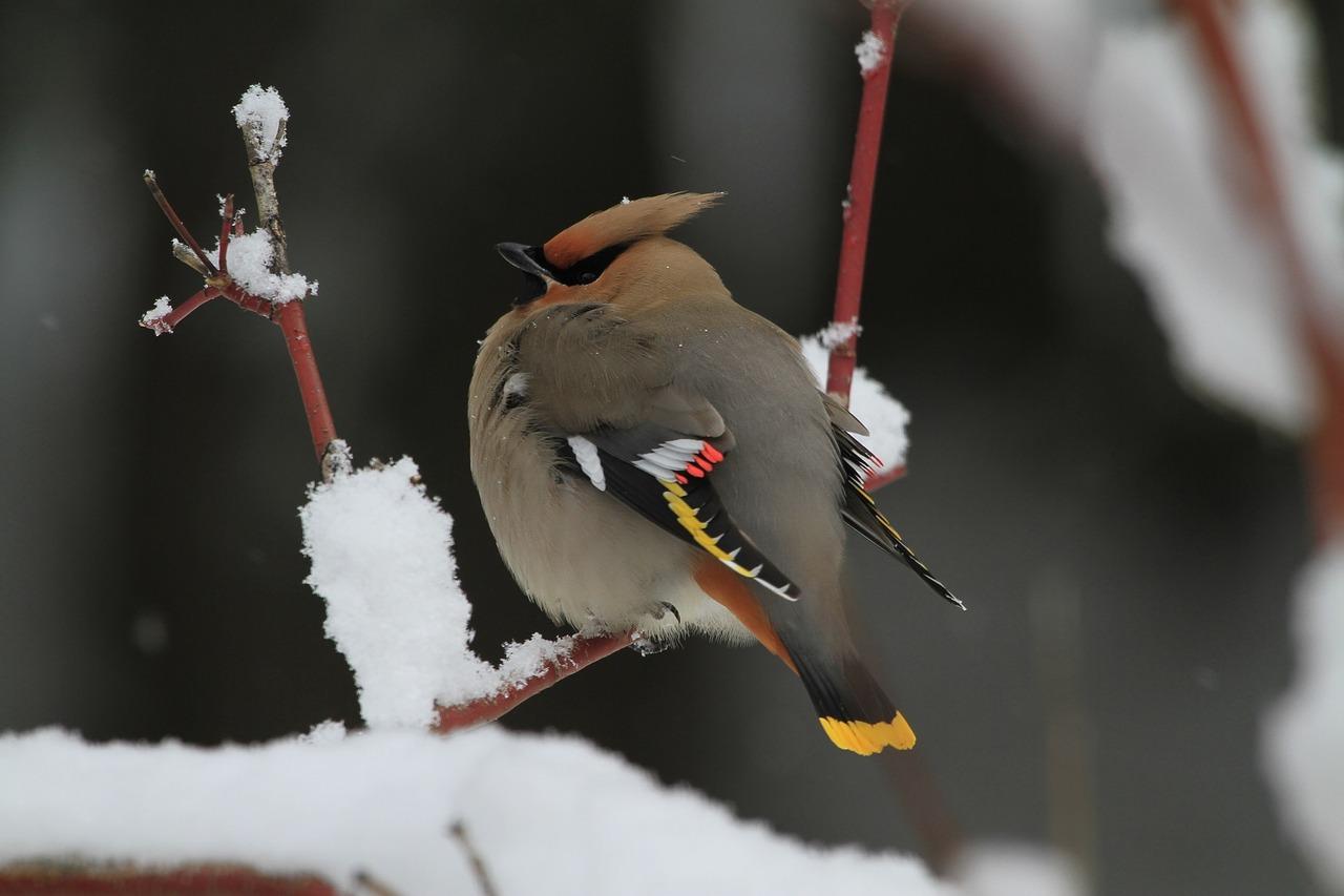 jaki to ptak, blog o dzikich zwierzętach, quiz o zwierzętach, animalistka, animalistka.pl