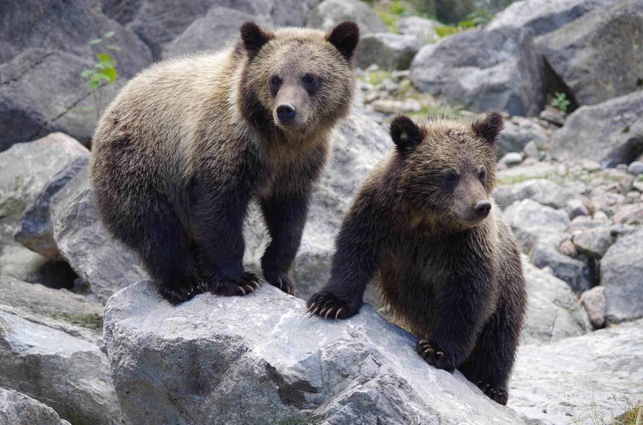 filmy o zwierzętach, quiz, animalistka, animalistka.pl, blog o zwierzętach, blog przyrodniczy, o przyrodzie