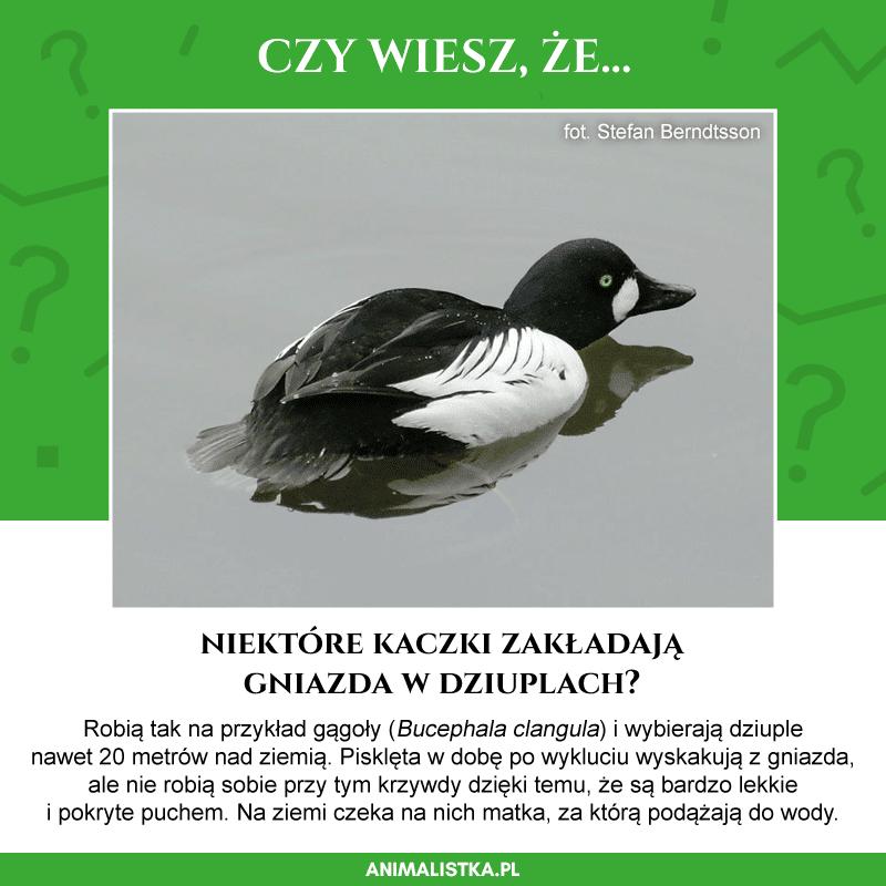 ciekawostki o zwierzętach, czy wiesz, że?, blog o dzikich zwierzętach, blog o przyrodzie, animalistka, animalistka.pl