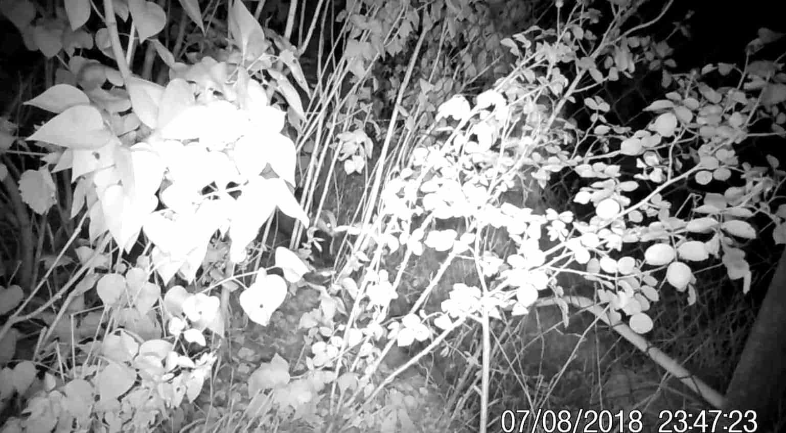 Dlaczego oczy zwierząt świecą w nocy, gp batteries, latarka czołowa, czołówka, Discovery, blog o dzikich zwierzętach, o przyrodzie, animalistka, animalistka.pl
