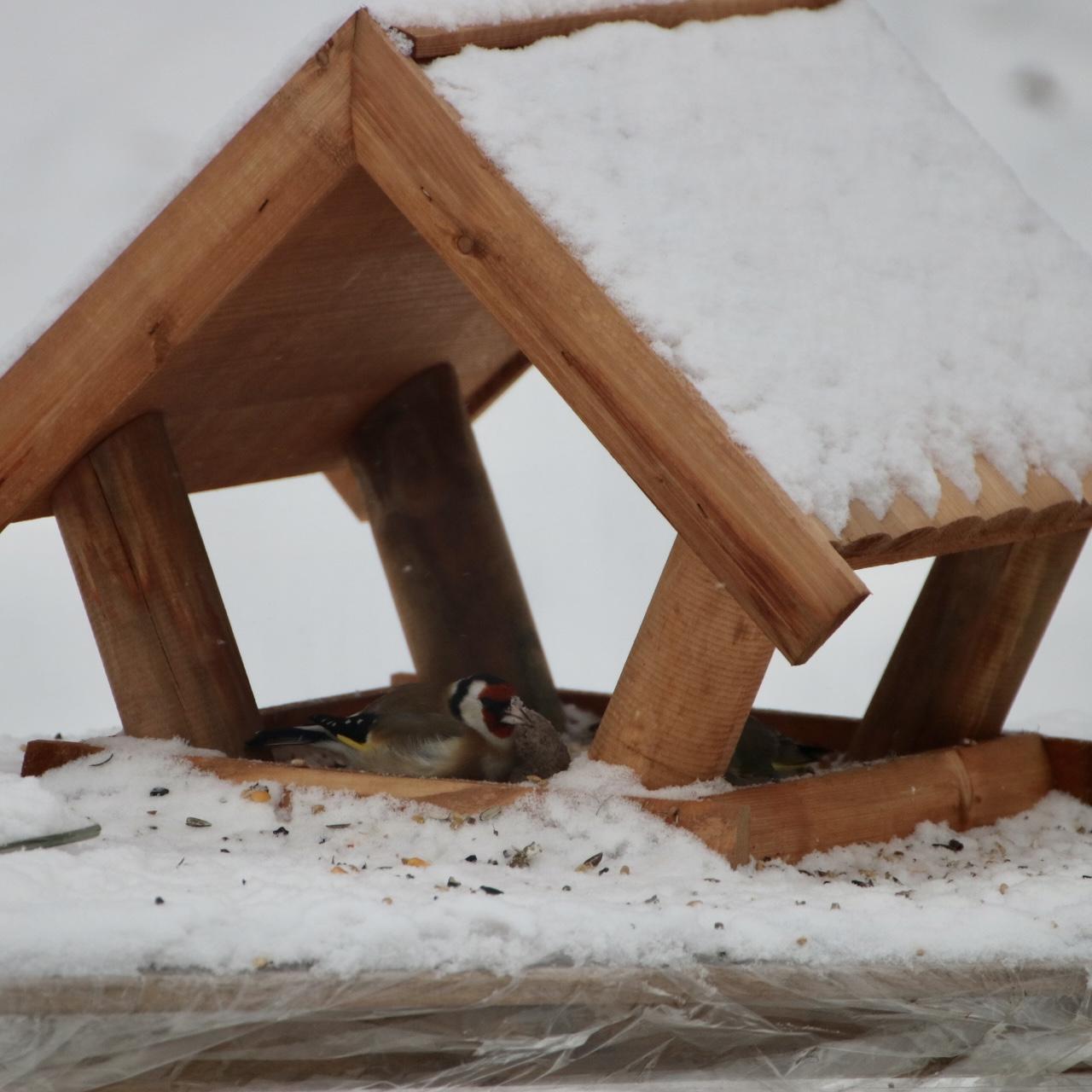 Szczygieł nie przejmował się innymi ptakami. Wbijał do karmnika i siedział w nim tak długo, aż się najadł.