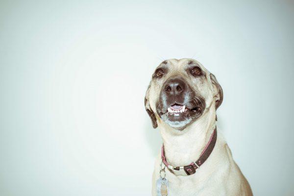 jakie suplementy dla psa, jakie witaminy dla psa, suplementacja psa, dbanie o zdrowie psa, blog o zwierzętach, blog o przyrodzie, animalistka, animalistka.pl