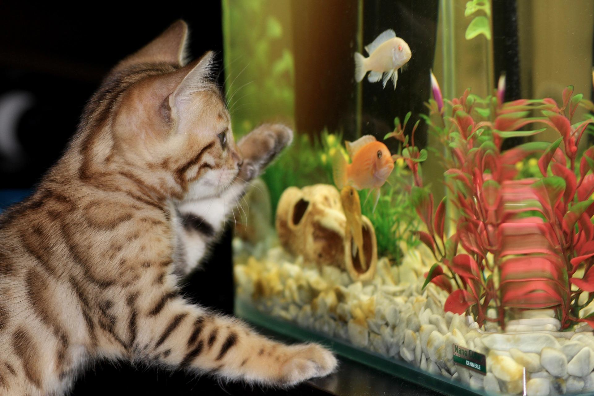 kot w domu, jak przygotować się na przyjęcie kociaka, dom przyjazny dla kota, allegro, karma dla kociąt, blog o zwierzętach, blog o przyrodzie, animalistka, animalistka.pl